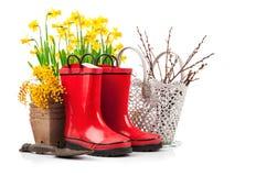 Da mola da flor do amarelo do narciso do jardim vida ainda Imagem de Stock