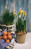 Da mola vida ainda com ovos e narciso Imagem de Stock