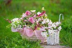 Da mola vida ainda no jardim fotos de stock royalty free