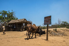 Da Morondava a Tsyngy nel Madagascar Fotografie Stock
