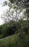 DA NANG SCENERY - Tree for monkey Linh Ung Temple stock image