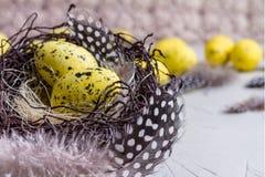 Da Páscoa vida ainda, cartão - ainda vida rústica com os ovos de codorniz no ninho na superfície concreta áspera Fotografia de Stock Royalty Free
