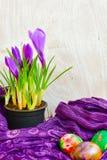 Da Páscoa vida ainda com ovos e açafrão coloridos das flores Foto de Stock
