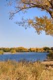 da parte albero del fiume Fotografie Stock Libere da Diritti