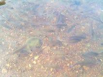 Da parte inferior de um rio Fotos de Stock Royalty Free