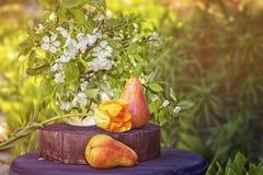 Da pera vida com arte das flores no fundo verde no jardim em um dia ensolarado, quadro matizado, horizontal ainda, cópia Imagem de Stock