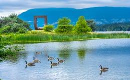 Da porta canadense dos gansos da lagoa estátua noroeste Vancôver Ingleses Colu Fotos de Stock Royalty Free