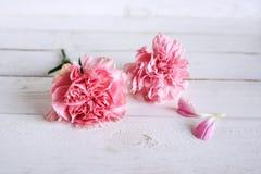 Da proposta vida ainda com as flores cor-de-rosa do cravo Fotografia de Stock Royalty Free