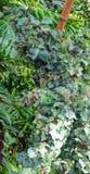 ` Da senhora da folha do ` no parque do reino animal, Walt Disney World, Orlando, Florida Foto de Stock