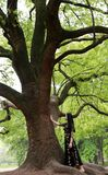 Da solo donna sotto un grande albero del fiore fotografia stock