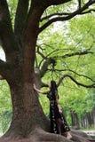 Da solo donna sotto un grande albero del fiore fotografie stock