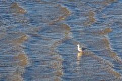 Da solo nel Se acqua basso di Kingston fotografie stock libere da diritti