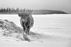Da solo nella neve Immagini Stock Libere da Diritti