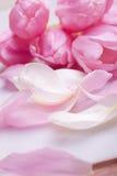 Da tulipa da flor da decoração vida cor-de-rosa ainda Foto de Stock