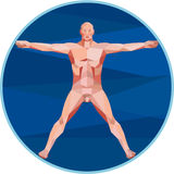 Da Vinci Man Anatomy Low Polygon. Low Polygon style illustration on the Da Vinci man Vitruvian Man male human anatomy showing a male spread eagle spreading arms Stock Photos