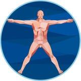 Da Vinci Man Anatomy Low Polygon Stock Photos