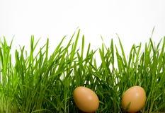 Daar eieren in gras Royalty-vrije Stock Foto's
