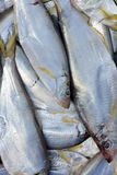 Dace fish fresh in sliver Stock Images