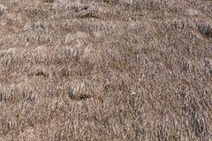 Dach des getrockneten Grases Stockbilder