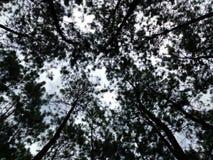 Dach des Waldes Lizenzfreie Stockbilder
