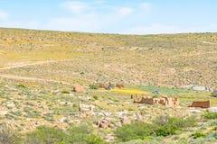 Dach Namaqualand ślad Zdjęcie Stock