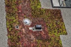 Dach z sedum i rooflight Fotografia Royalty Free