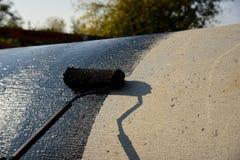 Dacharza pracownik maluje czarną węglową smołę bitum lub zdjęcia royalty free