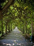 Dachau, Bavaria, Germany - beautiful linden trees tunnel. Dachau, Bavaria, Germany - beautiful green linden trees tunnel, fresh in summertime with sunbeam Stock Image