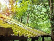 Dachowa płytka zakrywająca z zielonym mech obrazy stock
