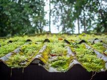 Dachowa płytka zakrywająca z zielonym mech obraz royalty free