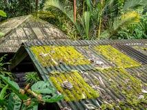 Dachowa płytka zakrywająca z zielonym mech obraz stock