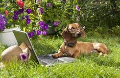dachshund γυαλιά σκυλιών Στοκ φωτογραφίες με δικαίωμα ελεύθερης χρήσης