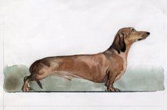 Dachshund που χρωματίζεται στο watercolor στο σχεδιάγραμμα στοκ φωτογραφίες με δικαίωμα ελεύθερης χρήσης