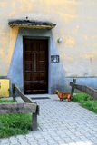 dachshund πόρτα Στοκ φωτογραφία με δικαίωμα ελεύθερης χρήσης