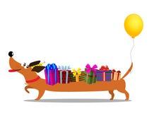 Dachshund στο καπέλο birthdat, με το baloon στο φέρνοντας δώρο ουρών διανυσματική απεικόνιση