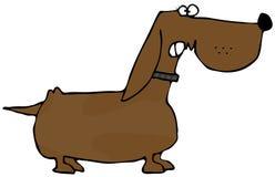dachshund склочный Стоковое Фото