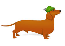 Free Dachshund Stock Photography - 18174582