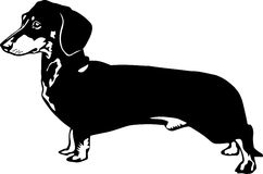 Dachshund. Black and white drawing of a dachshung Stock Photo