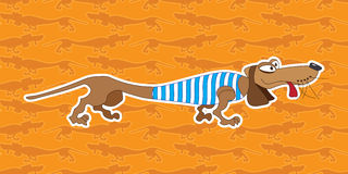 Dachshund Royalty Free Stock Photos