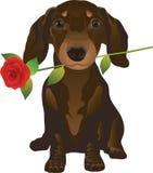 dachshund απεικόνιση αποθεμάτων