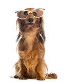 Dachshund, 4 years old, sitting, wearing glasses Royalty Free Stock Photos
