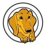 dachshund ilustração do vetor