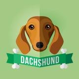 dachshund Immagini Stock Libere da Diritti