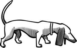 dachshund Immagini Stock