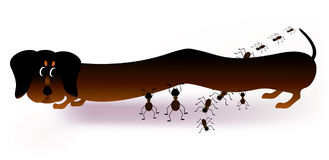 Dachshund and ants cartoon Stock Photography