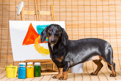 Dachshund artist near easel with its masterpiece. Cute talented dachshund in hat of artist at easel with its masterpiece painted by paints royalty free stock photo