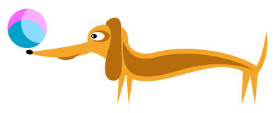 Dachshund and ball - Vector Royalty Free Stock Images