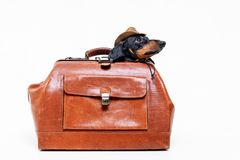 Dachshund breed dog, black and tan, in a cowboy hat hid in a vintage suitcase for travel, isolated on gray background.  royalty free stock photos