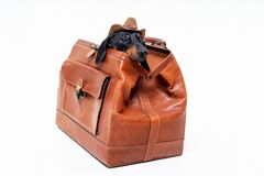 Dachshund breed dog, black and tan, in a cowboy hat hid in a vintage suitcase for travel, isolated on gray background.  royalty free stock photography