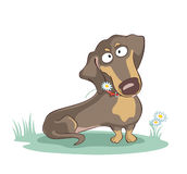 Dachshund with camomile. Vector illustration of dachshund with chamomiles behind his collar Royalty Free Stock Images